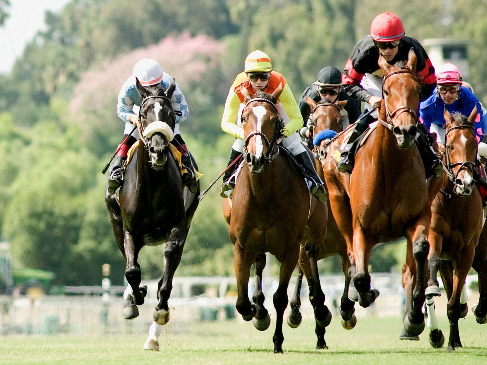 A quick system to help you place bets on horse racing